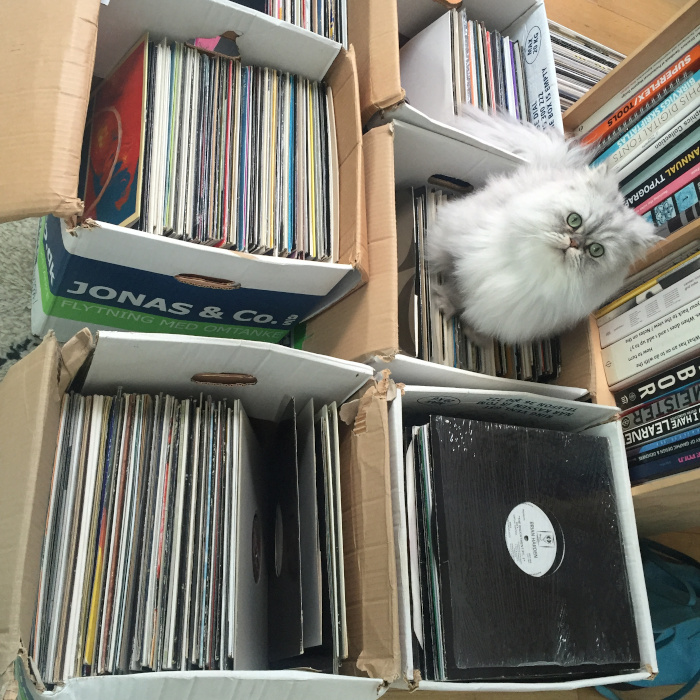 cat2 The Story Of Steen Kong & 10 Thousand Records